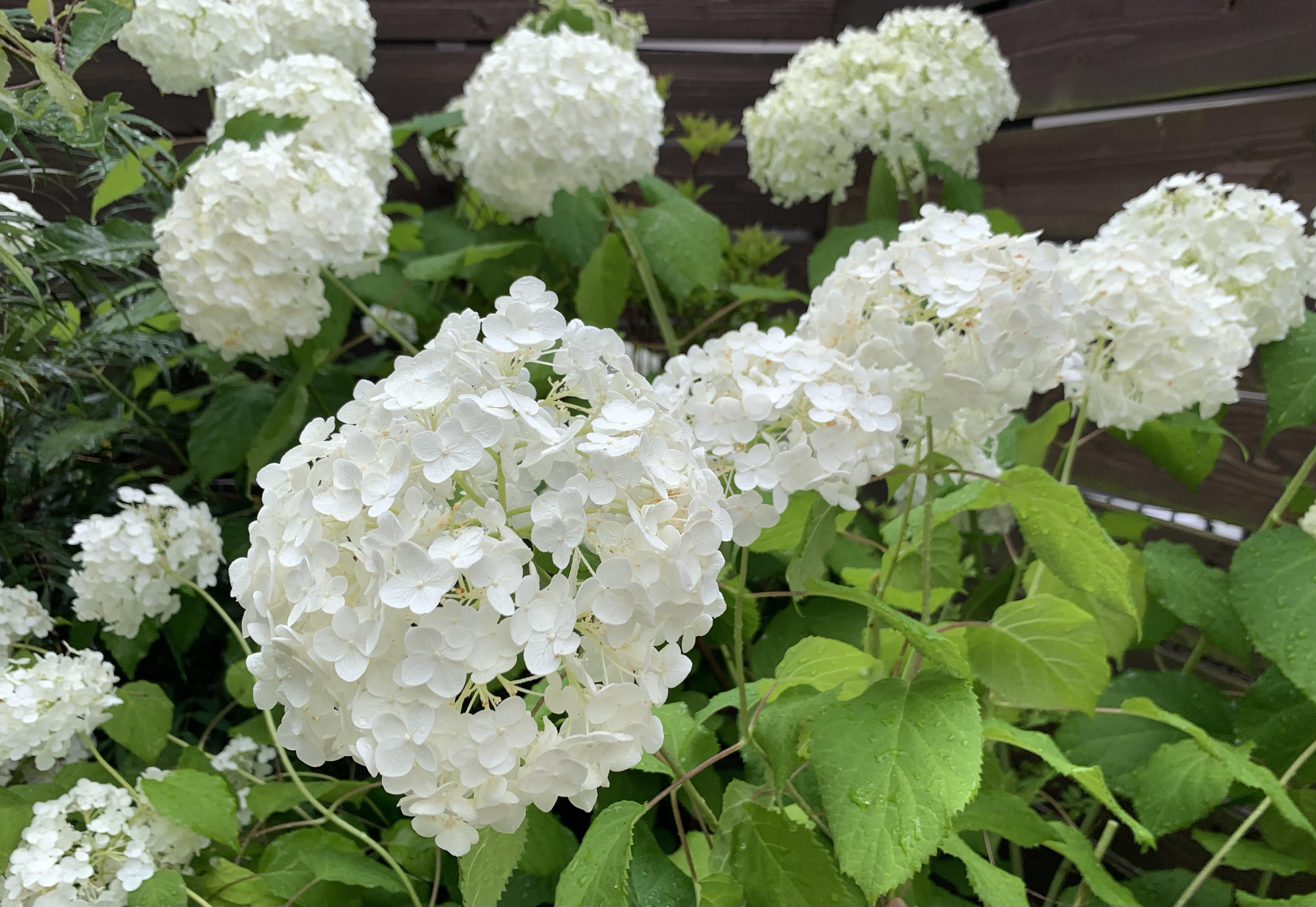 お庭に咲いたお花を2倍楽しむ!